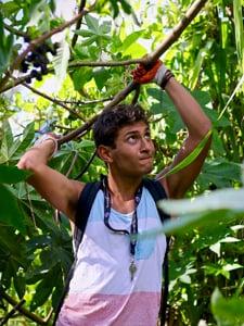 Explore more: Island Service