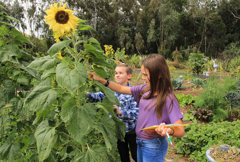 HPA Middle Schoolers studying a sunflower, garden