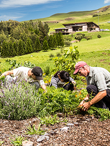 Sustainability at HPA, upper campus garden
